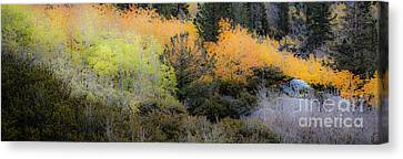 Inyo National Forest Canvas Print by Richard Smukler