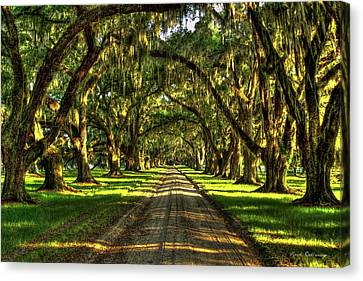 Live Oaks Of Tomotley Plantation Canvas Print by Reid Callaway