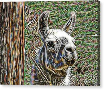 Llama Canvas Print by Marvin Blaine
