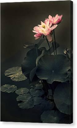 Midnight Lotus Canvas Print by Jessica Jenney