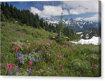 Mountain Meadow Canvas Print by Bob Gibbons