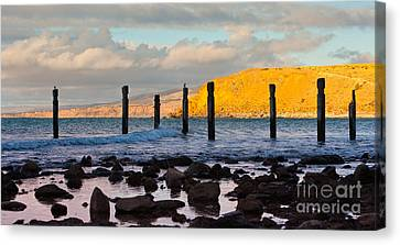 Myponga Beach Jetty Ruins Canvas Print by Bill  Robinson