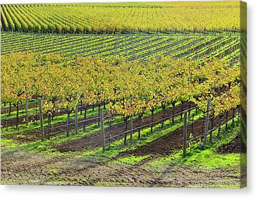 Napa Valley California In Autumn Canvas Print by Brandon Bourdages