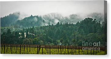 Napa Valley, California Canvas Print by Richard Smukler