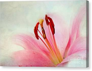 Pink Lily Canvas Print by Nailia Schwarz