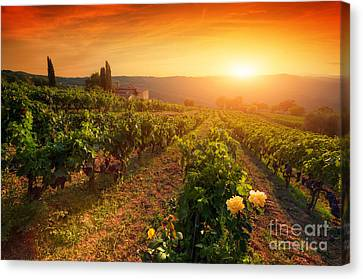 Ripe Wine Grapes On Vines In Tuscany, Italy Canvas Print by Michal Bednarek