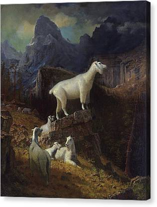 Rocky Mountain Goats Canvas Print by Celestial Images