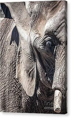 San Diego Zoo, California Canvas Print by Richard Smukler