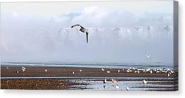 Seagull Canvas Print by Svetlana Sewell