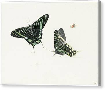 Studies Of Two Butterflies Canvas Print by Anton Henstenburgh