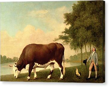 The Lincolnshire Ox Canvas Print by George Stubbs