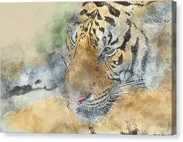 Tiger Close Up - Digital Art Watercolor Canvas Print by Brandon Bourdages