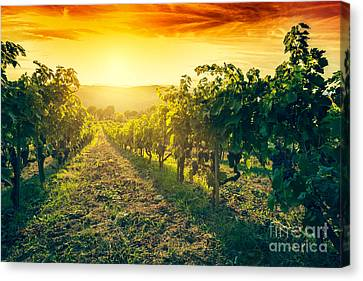 Vineyard In Tuscany, Italy Canvas Print by Michal Bednarek