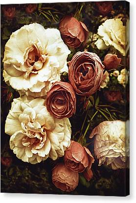 Antique Roses Canvas Print by Jessica Jenney