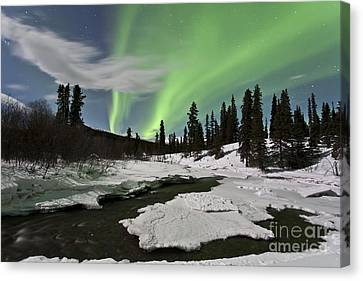 Aurora Borealis Over Creek, Yukon Canvas Print by Jonathan Tucker