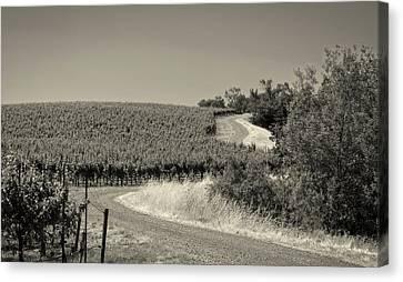 California Vineyard Trail Canvas Print by Mountain Dreams