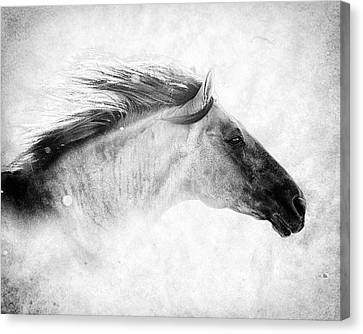 Chase The Wind Canvas Print by Ron  McGinnis