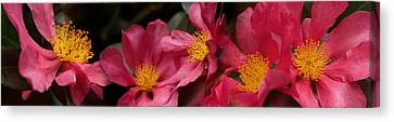 Close-up Of Pink Flowers In Bloom Canvas Print by Panoramic Images