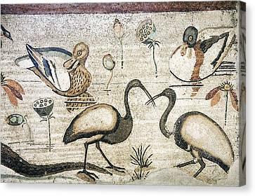 Nile Flora And Fauna, Roman Mosaic Canvas Print by Sheila Terry