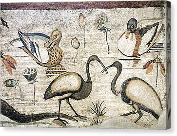 Nile Flora And Fauna, Roman Mosaic Canvas Print by Sheila Terry