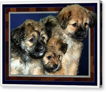 3 Pups Canvas Print by Harry Hunsberger