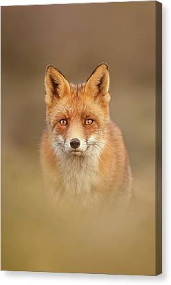 That Foxy Face Canvas Print by Roeselien Raimond