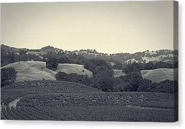 Vineyards Of Napa Valley Canvas Print by Mountain Dreams