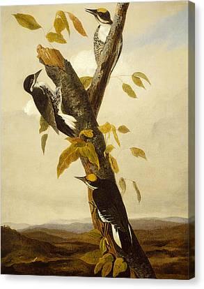 Woodpeckers Canvas Print by John James Audubon