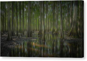 Untitled Canvas Print by Bill Martin