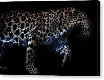 Amur Leopard Canvas Print by Martin Newman