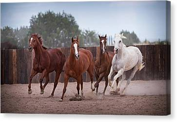 4 Horses Canvas Print by Steve Gadomski