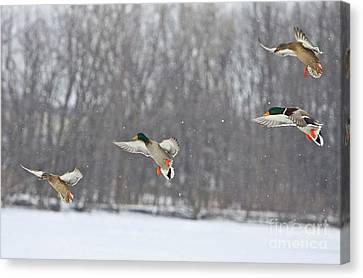 4 In A Row Canvas Print by Robert Pearson