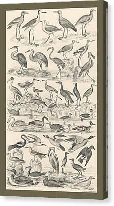 Ornithology Canvas Print by Captn Brown