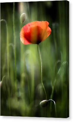 Poppy Canvas Print by Silke Magino