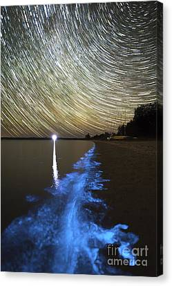 Star Trails And Bioluminescence Canvas Print by Philip Hart