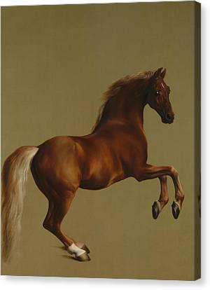 Whistlejacket Canvas Print by George Stubbs