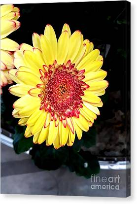 Yellow Flower  Canvas Print by Joyce Woodhouse