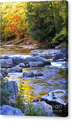 Fall Color Williams River Canvas Print by Thomas R Fletcher