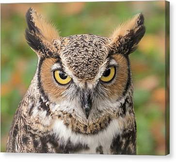 Great Horned Owl Canvas Print by Jim Hughes