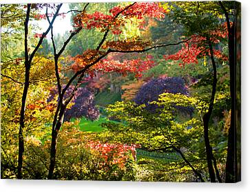Trees In A Garden, Butchart Gardens Canvas Print by Panoramic Images