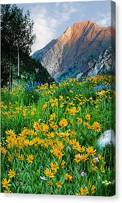 Wasatch Mountains Canvas Print by Utah Images