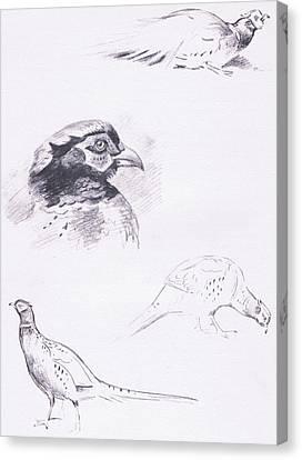 Pheasants Canvas Print by Archibald Thorburn