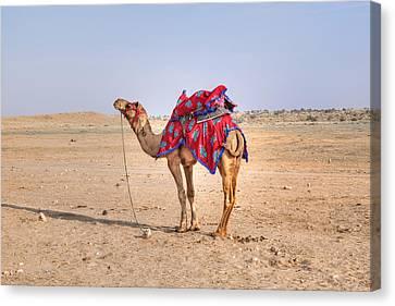 Thar Desert - India Canvas Print by Joana Kruse