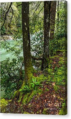 Back Fork Of Elk River Canvas Print by Thomas R Fletcher