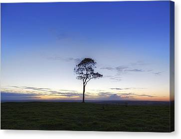 Roundway Hill - England Canvas Print by Joana Kruse