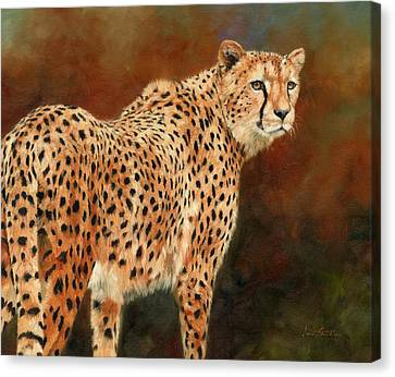Cheetah Canvas Print by David Stribbling