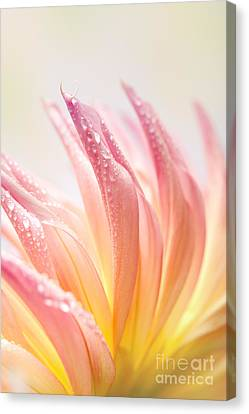 Dahlia Canvas Print by Nailia Schwarz
