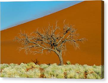 Sand Dune, Sossusvlei, Namib Desert Canvas Print by Panoramic Images