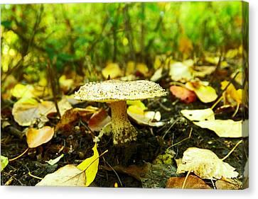 A Big Mushroom Canvas Print by Jeff Swan