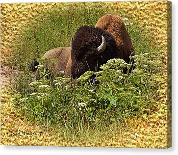 A Bison At Rest Canvas Print by Kae Cheatham